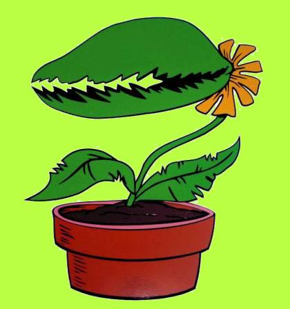 Fleischfressende Pflanzen - Carnivor Plants